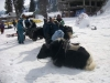 Yak ride in the snow